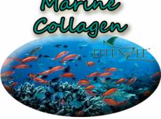Marine Collagen – Kelebihan EFFENZEE