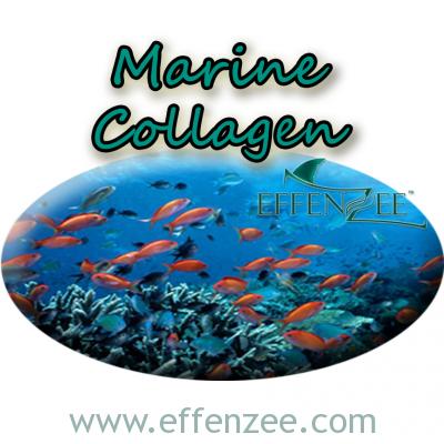 effenzee marine collagen watermark kolagen ikan laut