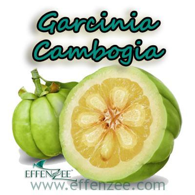 Garcinia Cambogia – Kelebihan EFFENZEE
