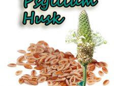Psyllium Husk – Kelebihan EFFENZEE